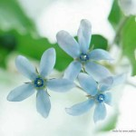 Flowers520