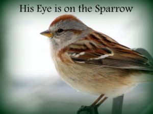 Sparrow-with-color